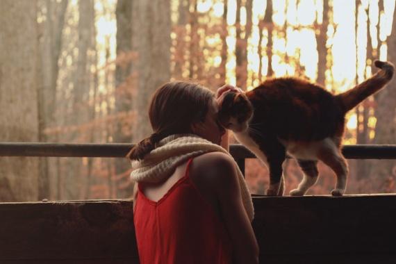 Влияние кошек на настроение и где купить корм для любимца?